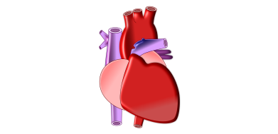 «Кардиология и кардиохирургия: инновационные решения – 2017»